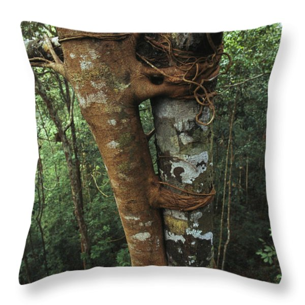 Host Tree Lashed With The Roots Throw Pillow by Tim Laman