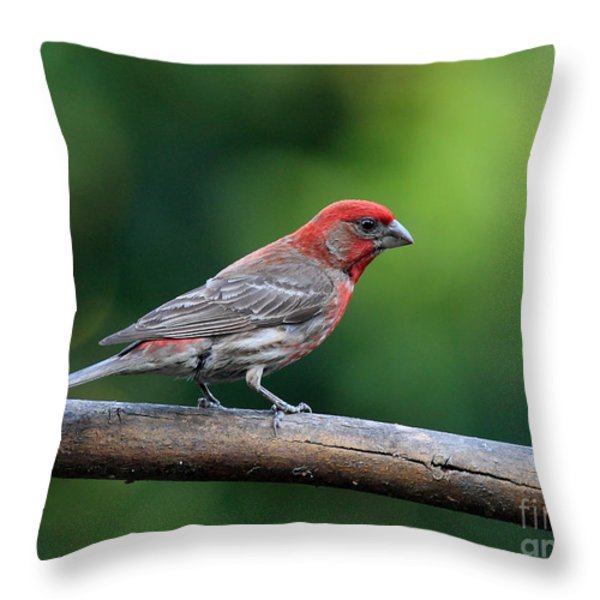 House Finch Bird . 40D8331 Throw Pillow by Wingsdomain Art and Photography