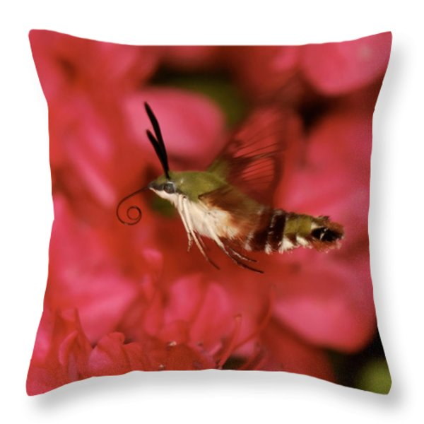 Hovering Clearwing Hummingbird Moth Throw Pillow by Lara Ellis
