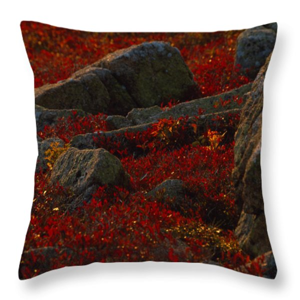 Huckleberry Bushes And Multi-hued Throw Pillow by Michael Melford