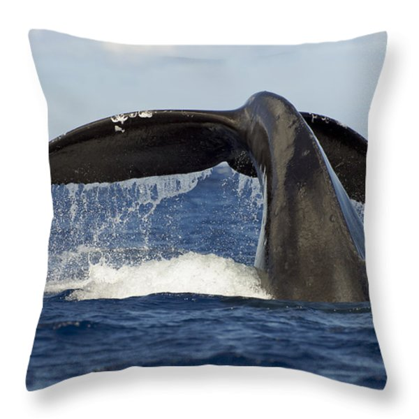 Humpback Tail Throw Pillow by Dave Fleetham