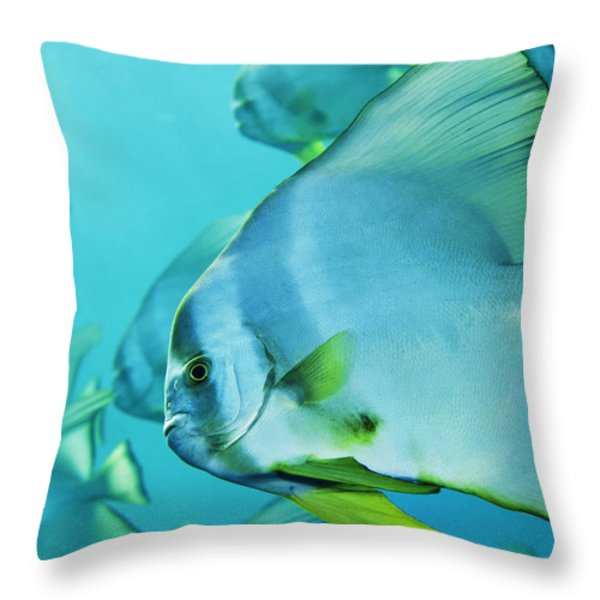 Hunting For Plankton, A School Throw Pillow by Brian J. Skerry