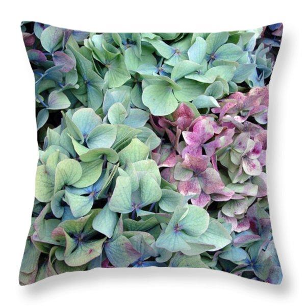 Hydrangea Flower Background Throw Pillow by Jane Rix