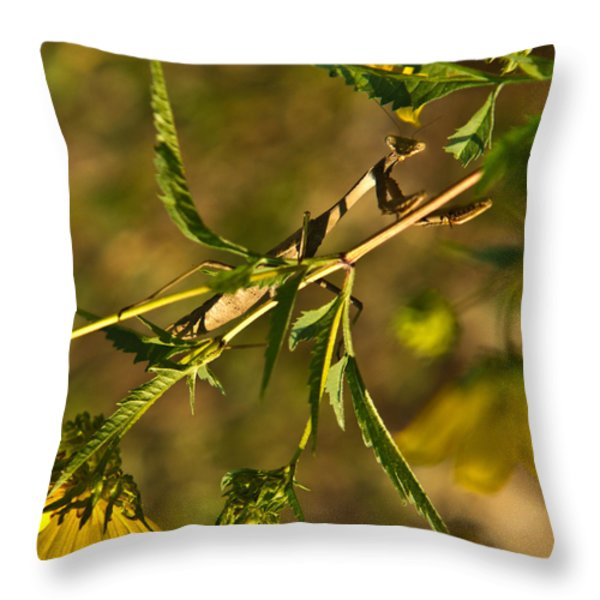 I See You and You Are Mine Throw Pillow by Douglas Barnett