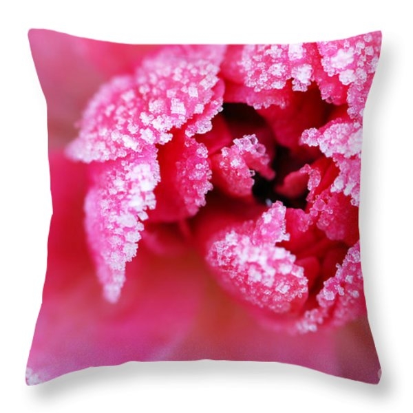 Icy Rose Throw Pillow by Elena Elisseeva