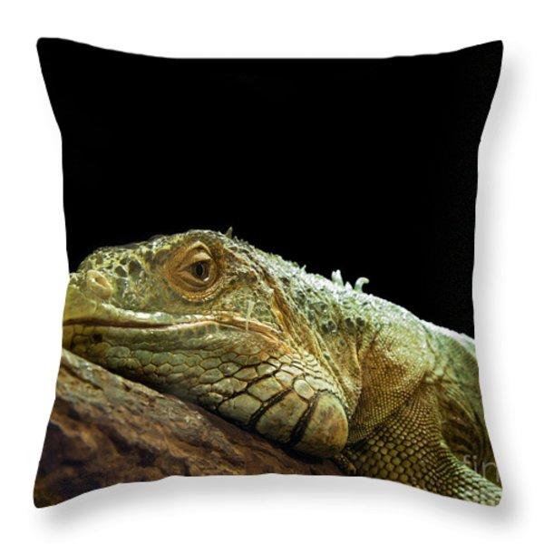 Iguana Throw Pillow by Jane Rix