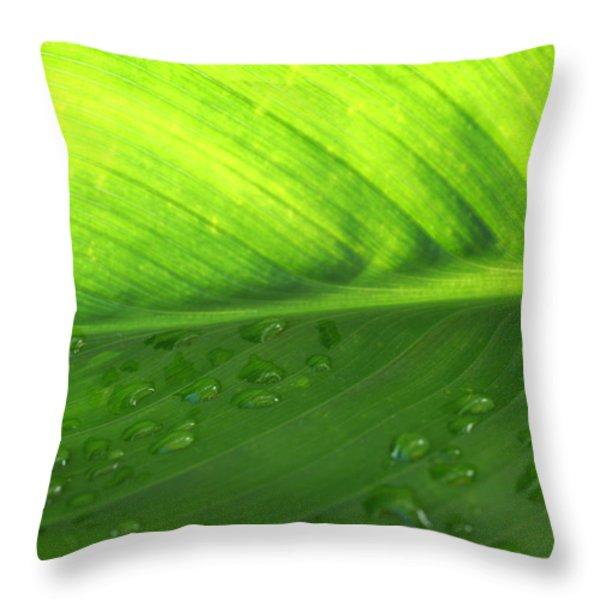 Illuminate Throw Pillow by Angela Hansen