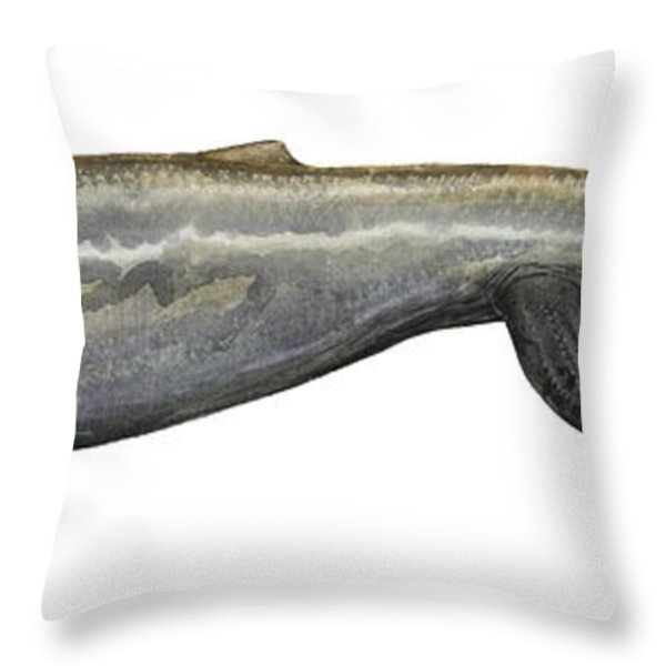 Illustration Of A Plotosaurus Throw Pillow by Sergey Krasovskiy