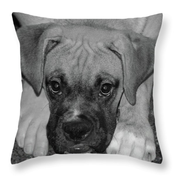 Impawsible Throw Pillow by DigiArt Diaries by Vicky B Fuller