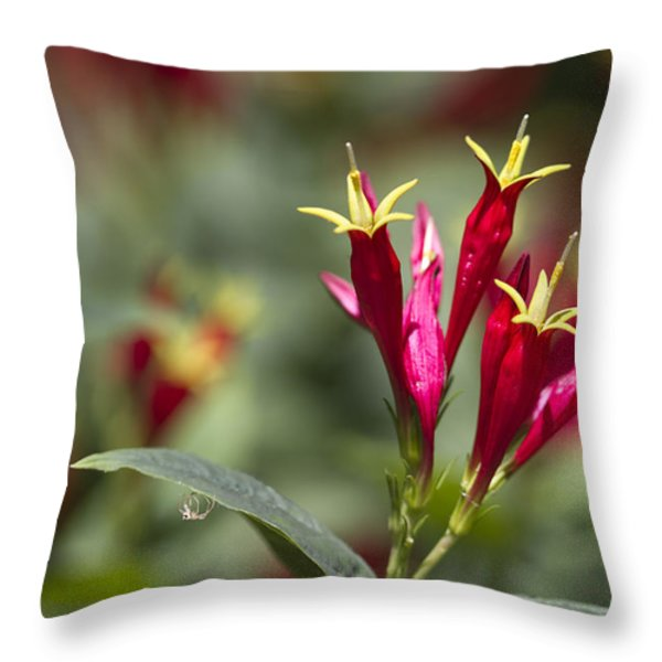 Indian Pink - Spigelia Marilandica - Firecracker Wildflowers Throw Pillow by Kathy Clark