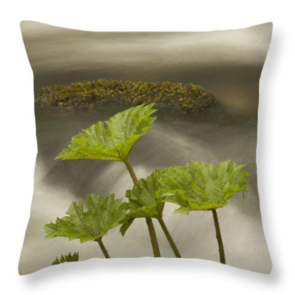 Indian Rhubarb Darmera Peltata Growing Throw Pillow by Phil Schermeister
