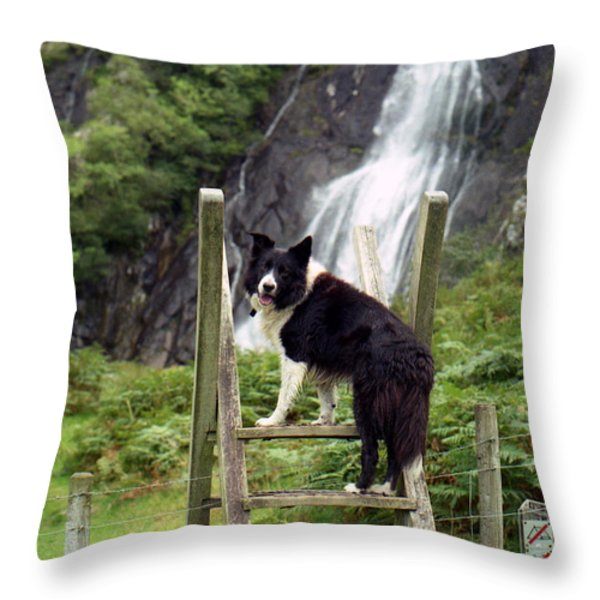Indy At Aber Falls Throw Pillow by Michael Haslam