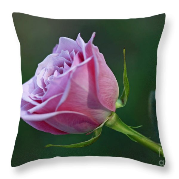 Innocence At Sunrise- Pink Rose Blossom Throw Pillow by Inspired Nature Photography By Shelley Myke