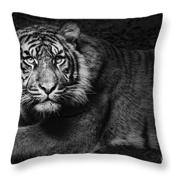 Intent Throw Pillow by Andrew Paranavitana