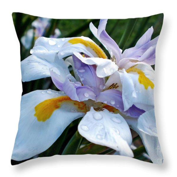 Iris enjoying the Sunshine Throw Pillow by Kaye Menner