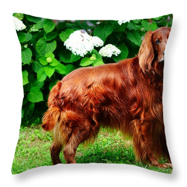 Irish Setter III Throw Pillow by Jenny Rainbow