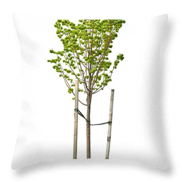 Isolated Young Linden Tree Throw Pillow by Elena Elisseeva