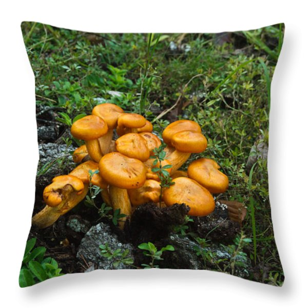 Jack OLantern Mushrooms 12 Throw Pillow by Douglas Barnett