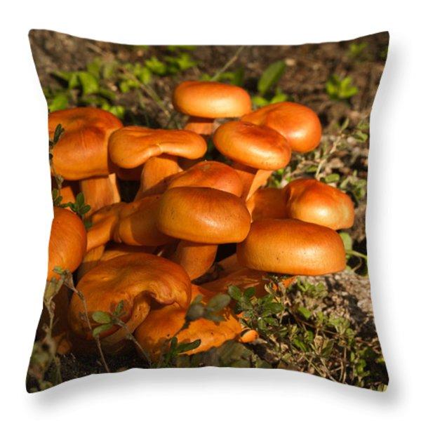 Jack Olantern Mushrooms 24 Throw Pillow by Douglas Barnett
