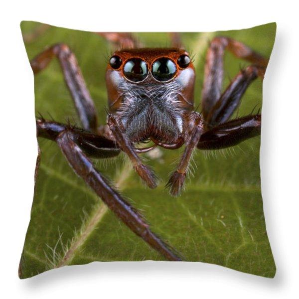 Jumping Spider Papua New Guinea Throw Pillow by Piotr Naskrecki