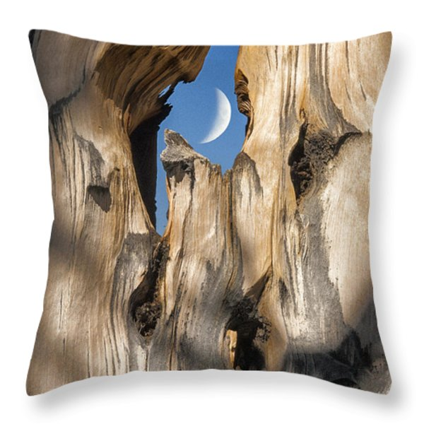 Just Passing By Throw Pillow by Sandra Bronstein