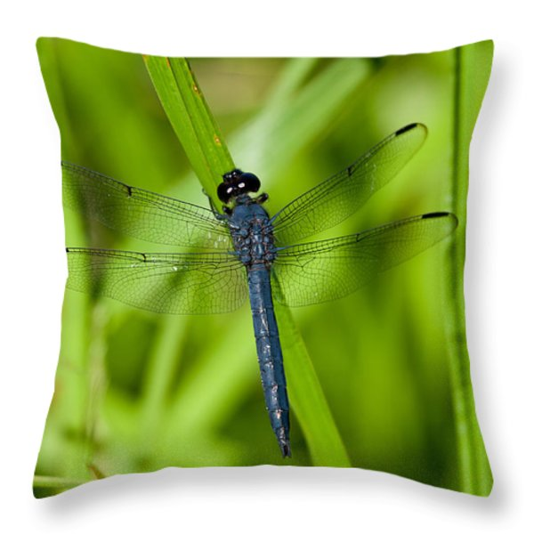 Just Resting Throw Pillow by Karol  Livote
