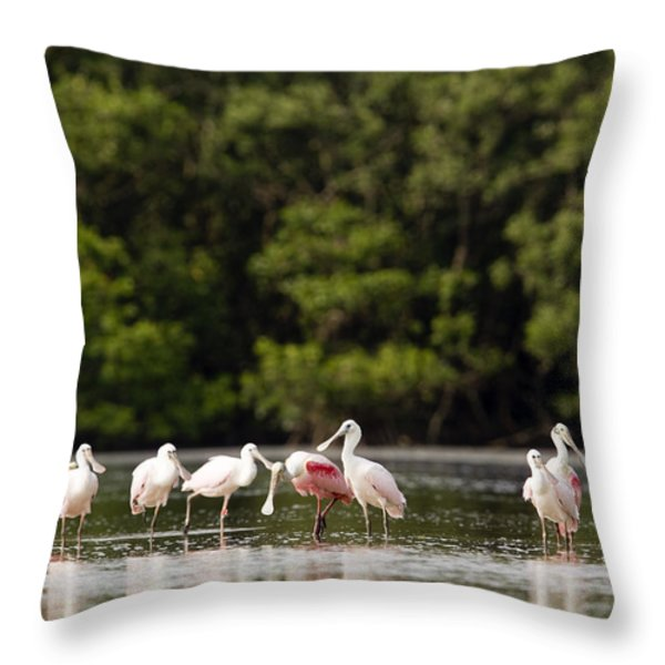 Juvenile And Adult Roseate Spoonbills Throw Pillow by Tim Laman