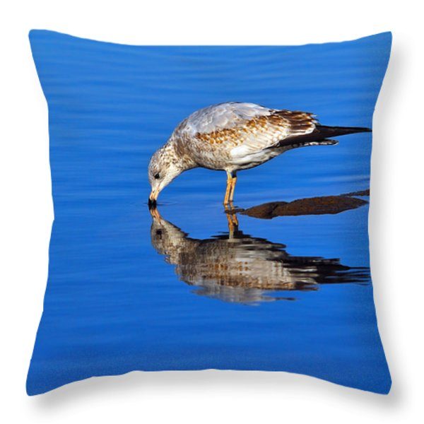 Juvenile Ring-billed Gull  Throw Pillow by Tony Beck