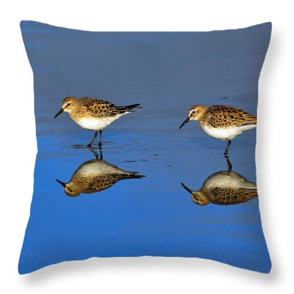 Juvenile White-rumped Sandpipers Throw Pillow by Tony Beck
