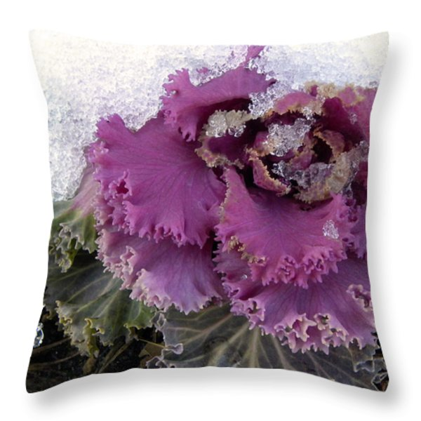 Kale Plant In Snow Throw Pillow by Sandi OReilly