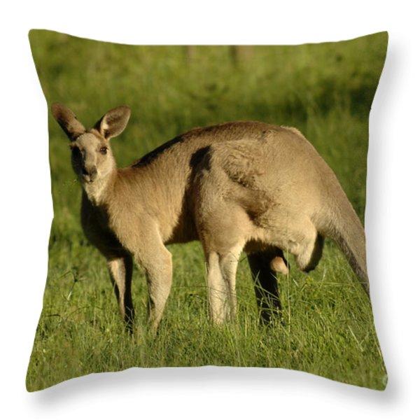 Kangaroo Male Throw Pillow by Bob Christopher
