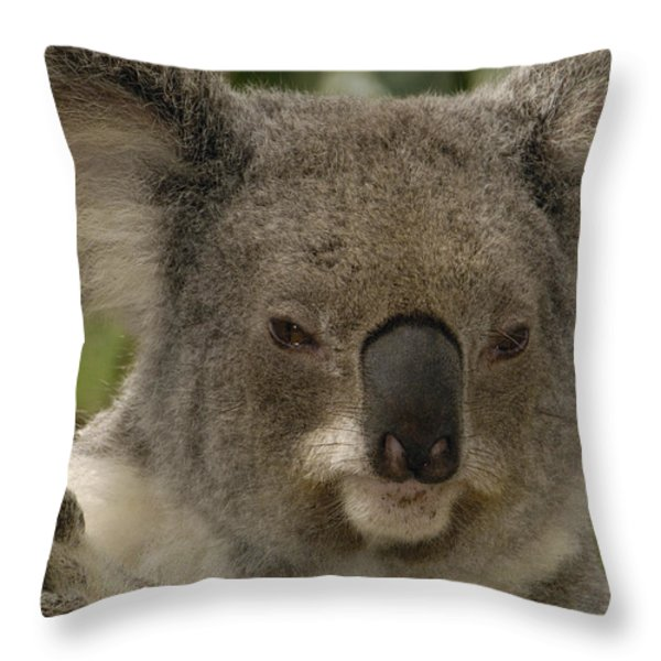Koala Phascolarctos Cinereus Portrait Throw Pillow by Pete Oxford