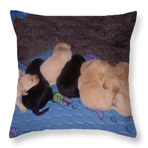 Lab Pups 3 Throw Pillow by Aimee L Maher Photography and Art