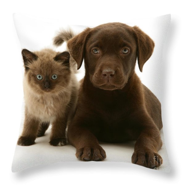 Labrador Pup And Birman-cross Kitten Throw Pillow by Jane Burton