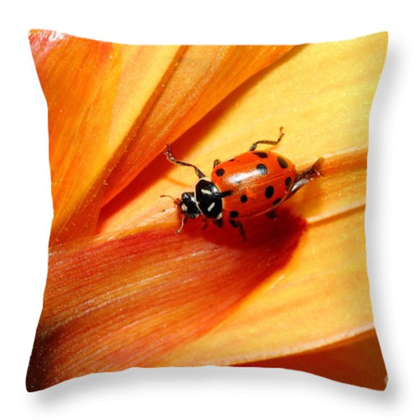Ladybug On Orange Yellow Dahlia . 7d14686 Throw Pillow by Wingsdomain Art and Photography