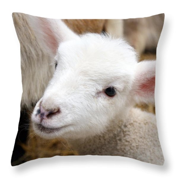 Lamb Throw Pillow by Michelle Calkins
