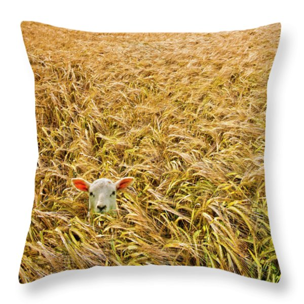lamb with barley Throw Pillow by Meirion Matthias