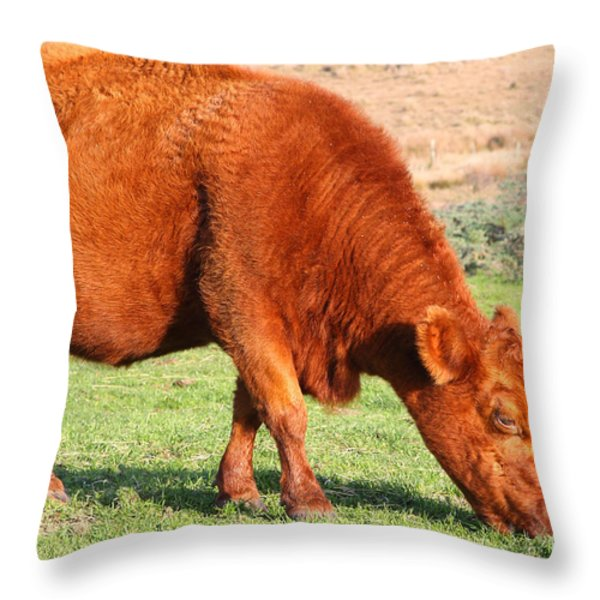 Landscape With Cow Grazing In The Field . 7D9926 Throw Pillow by Wingsdomain Art and Photography