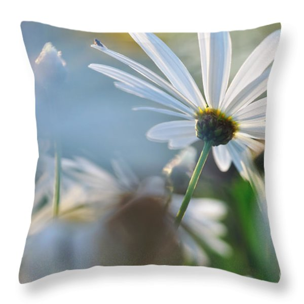 Late Sunshine On Daisies Throw Pillow by Kaye Menner