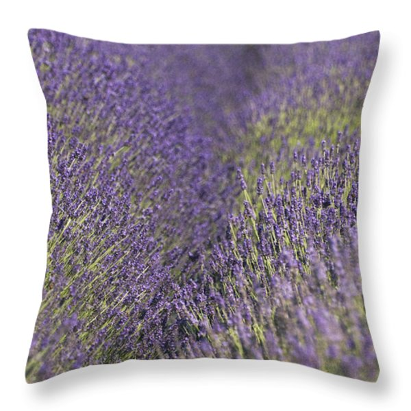 Lavender Fields Heart Throw Pillow by Anahi DeCanio