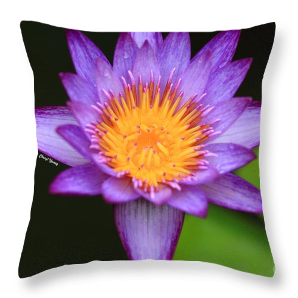 Lavender Waterlily Throw Pillow by Cheryl Young