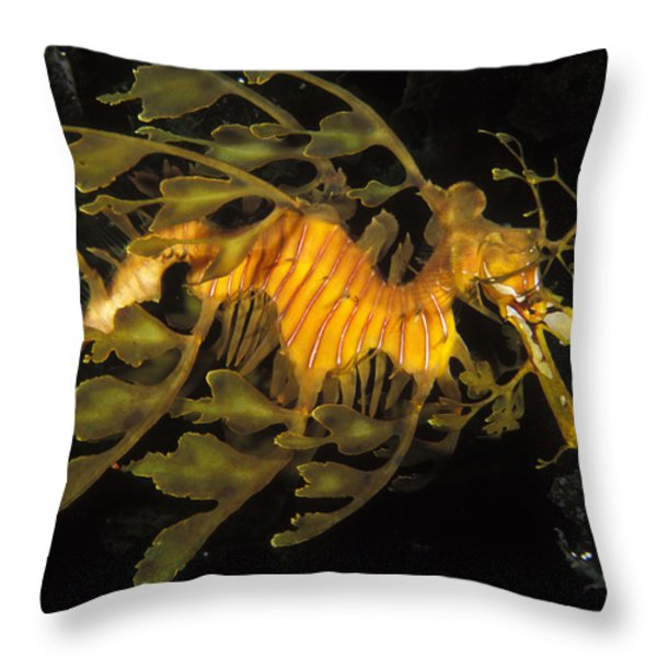 Leafy Seadragon, Off Kangaroo Island Throw Pillow by James Forte