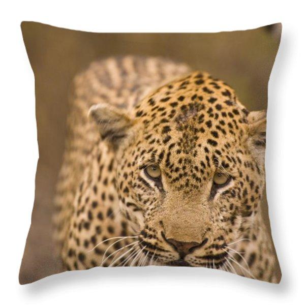 Leopard Panthera Pardus, Arathusa Throw Pillow by Stuart Westmorland