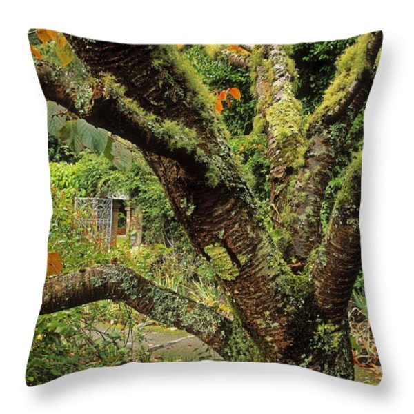 Lichen Covered Apple Tree, Walled Throw Pillow by The Irish Image Collection