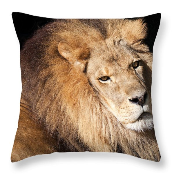 Lion Highlights Throw Pillow by Kenneth Albin