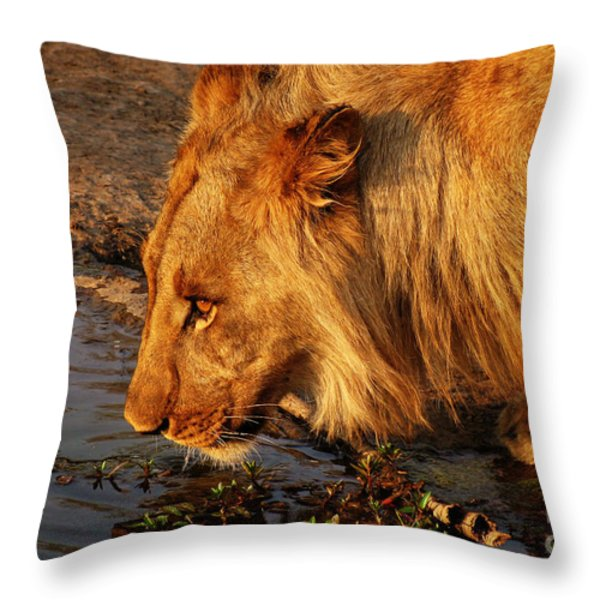 Lion's Pride Throw Pillow by Andrew Paranavitana