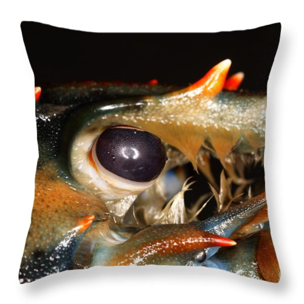 Lobster Eye Throw Pillow by Ted Kinsman