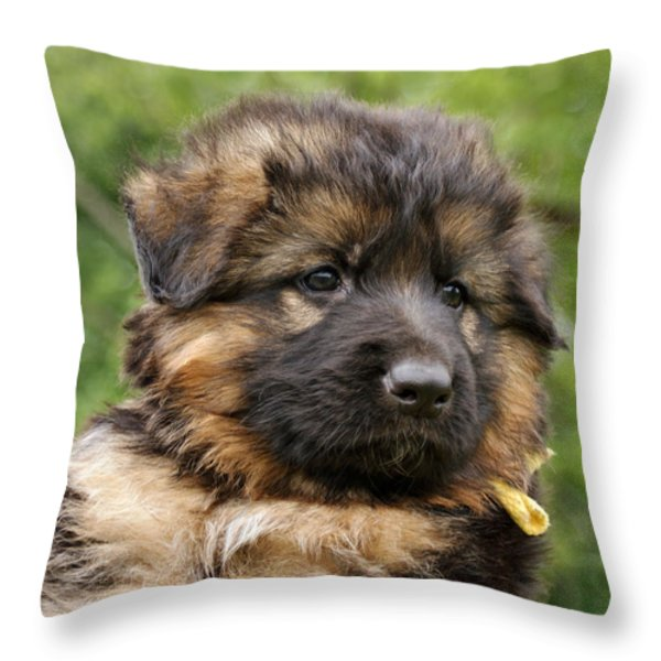 Long Coated Puppy Throw Pillow by Sandy Keeton