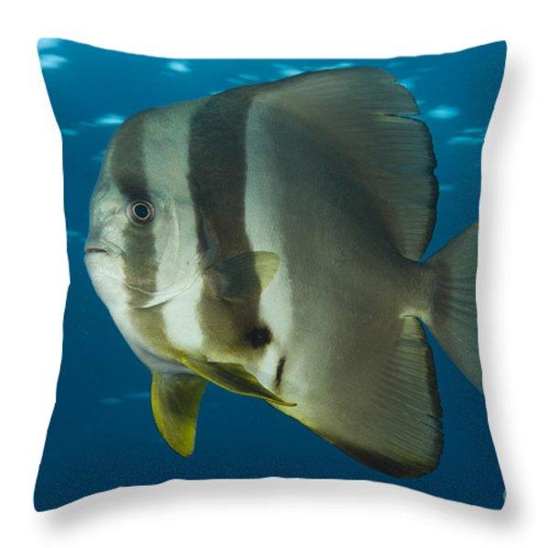 Longfin Spadefish, Papua New Guinea Throw Pillow by Steve Jones