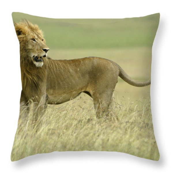 Looking Around Throw Pillow by Michele Burgess